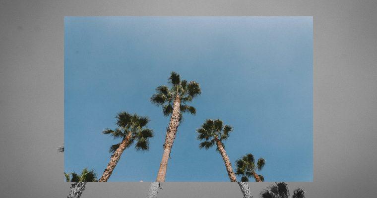 Palm Dreams